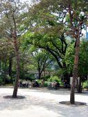 Dette var endnu en af Seouls fine, små parker. Her sad der store grupper af ældre mennesker og nød  vejret.